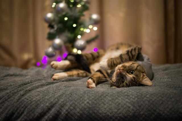 Kui kass tuleb uude koju või hoiukoju