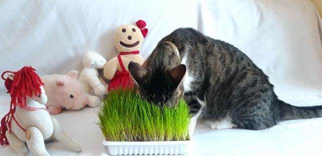 Soovitused kasside toitmiseks