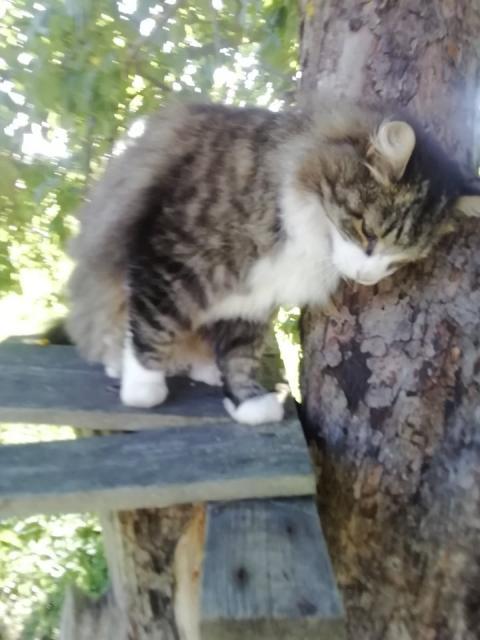 Mida teha, kui kass läheb kaduma?