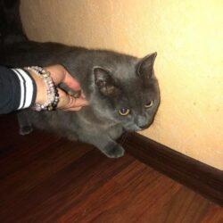 Vesihall kass