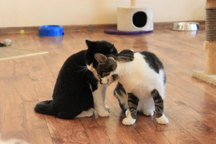 Raviprotseduurid, millega kassi puhul arvestada