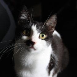 Kiki-Miki