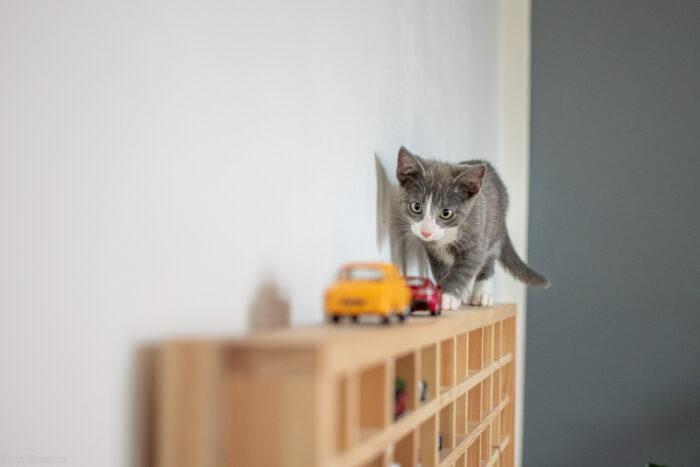 Miks tulla kassi(de) hoiukoduks?