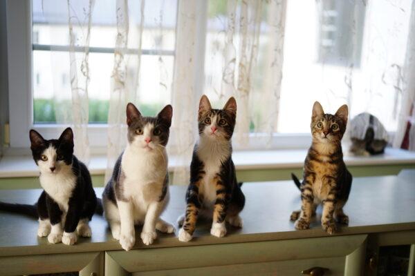 Kass laste ja noortega peres? Mõned soovitused