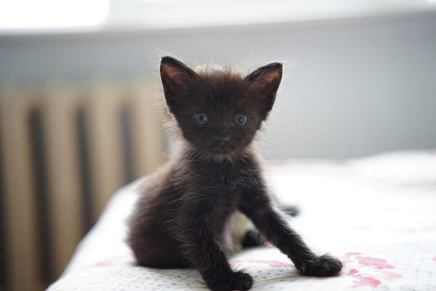 5 asja, mida kassi päästmiseks ise teha