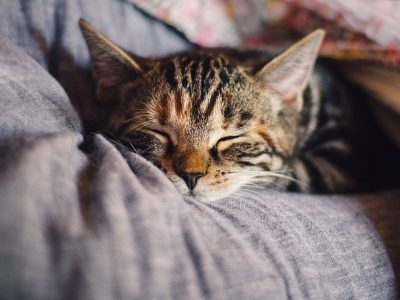 magav kass